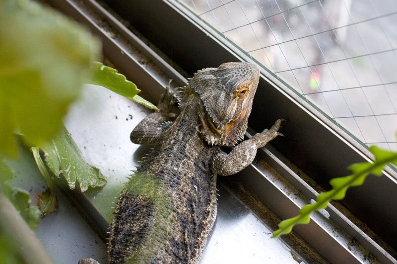 Reptile-Cafe-in-tokyo