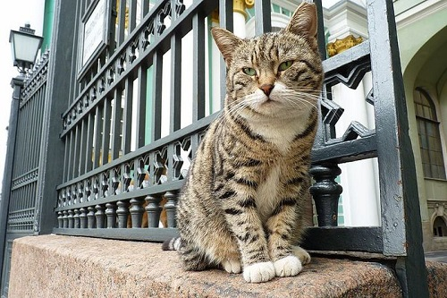 Cats-of-State-Hermitage-St.-Petersburg-17