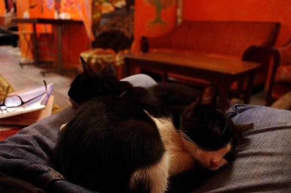 Stray-Cat-Hostel-Istanbul