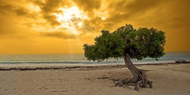 bigstock-Divi-tree-11389622-840x560