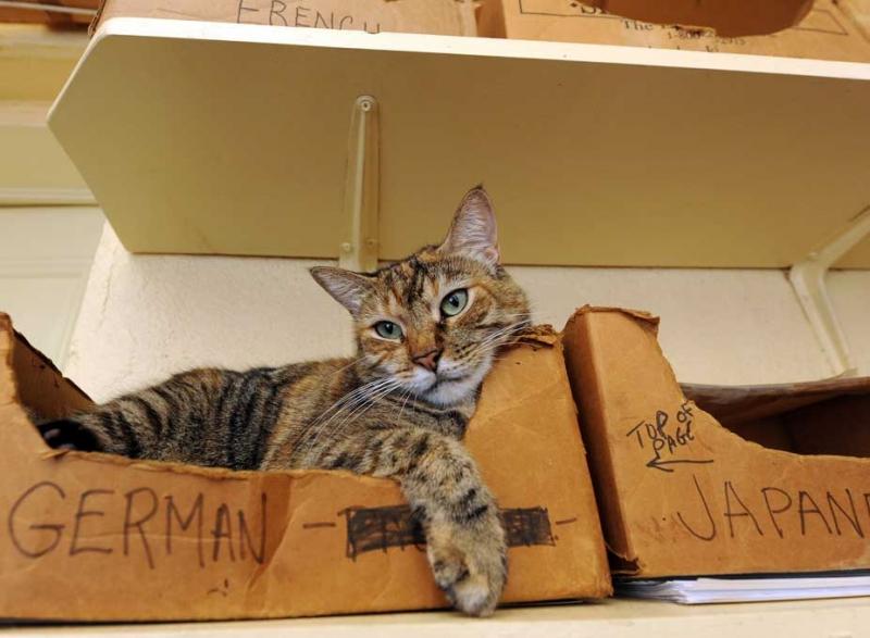 cat-pic-Wilhelmina-Harvey_800_587_100