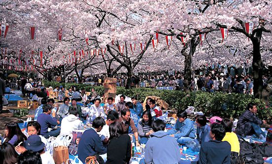 hanami_cherry_blossom_viewing_party_551w