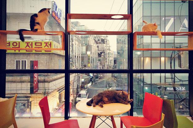 a-day-in-a-cat-café-in-seoul-south-korea-sabrina-iovino-justonewayticket-com (4)