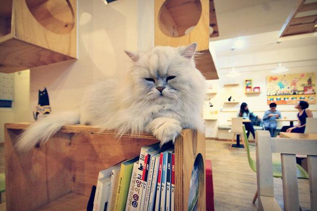 a-day-in-a-cat-café-in-seoul-south-korea-sabrina-iovino-justonewayticket-com (5)