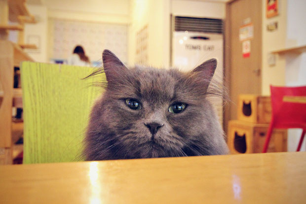 a-day-in-a-cat-café-in-seoul-south-korea-sabrina-iovino-justonewayticket-com (6)