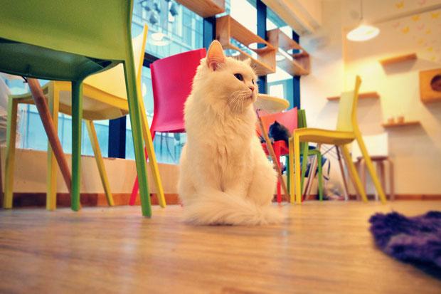 a-day-in-a-cat-café-in-seoul-south-korea-sabrina-iovino-justonewayticket-com