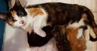 paralyzed-cat-mother-kittens-princess-3
