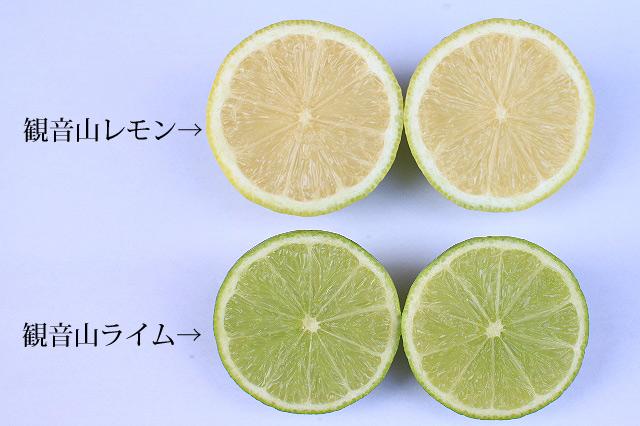 lime7