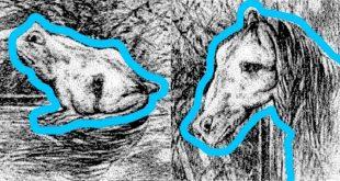 คุณมองภาพนี้ แล้วเห็นเป็นอะไร ม้า หรือ กบ ??!!