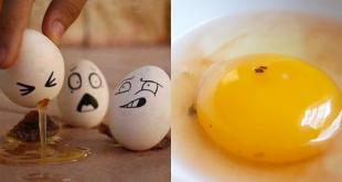 ไข่ไก่มีจุดเลือด
