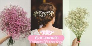"""รู้จัก """"ยิปโซ"""" ตัวแทนความรัก สารพัดดอกไม้แห่งความสุข"""